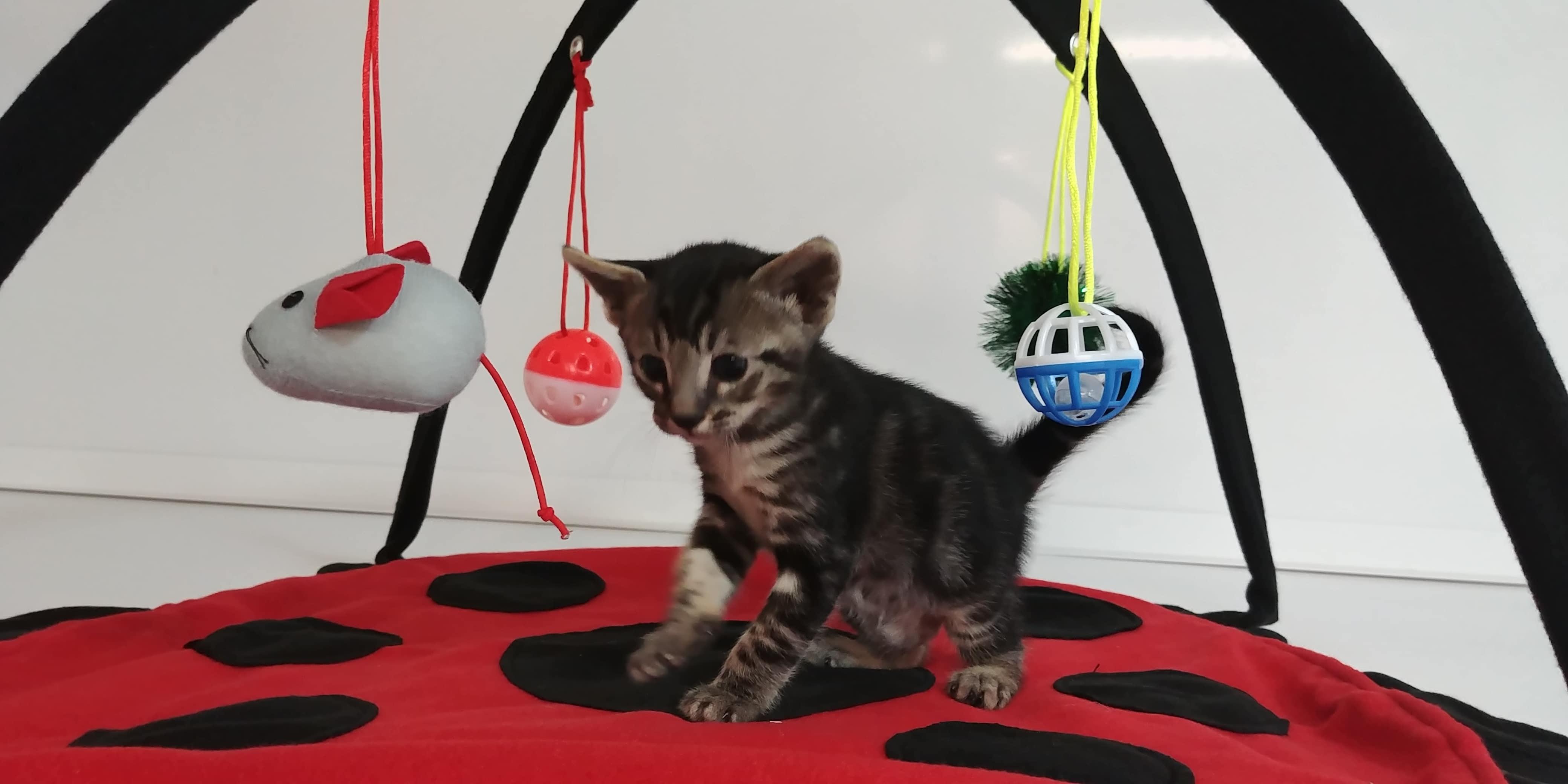 Exotik Cats (15)