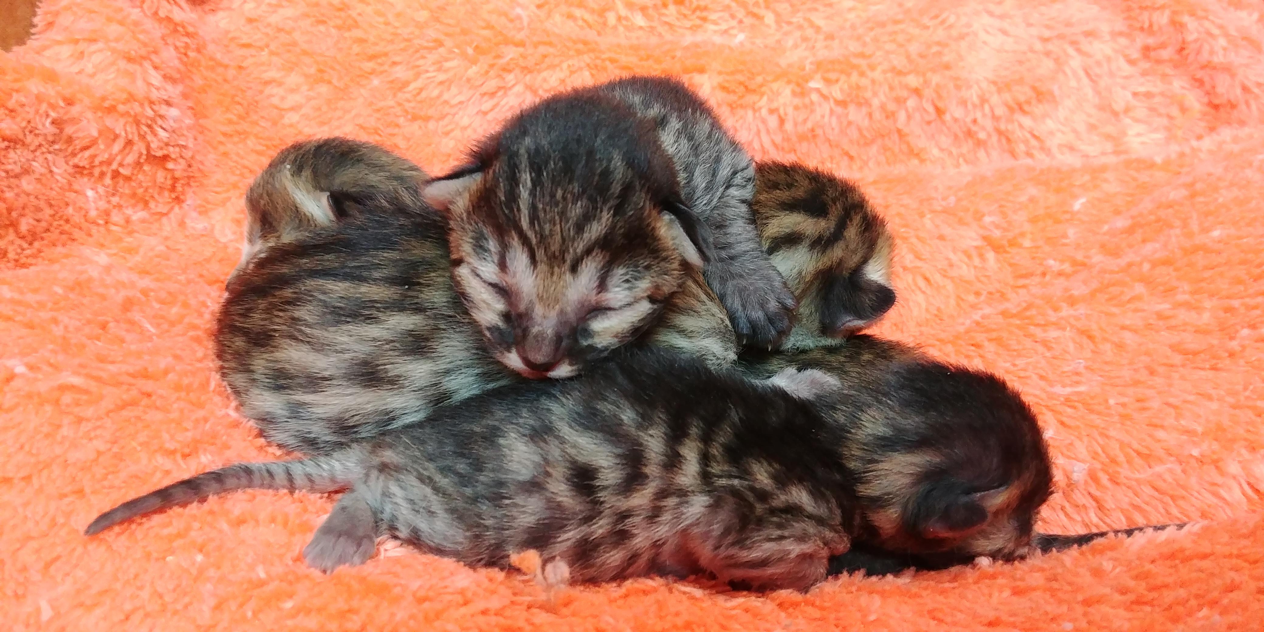Exotik Cats (19)