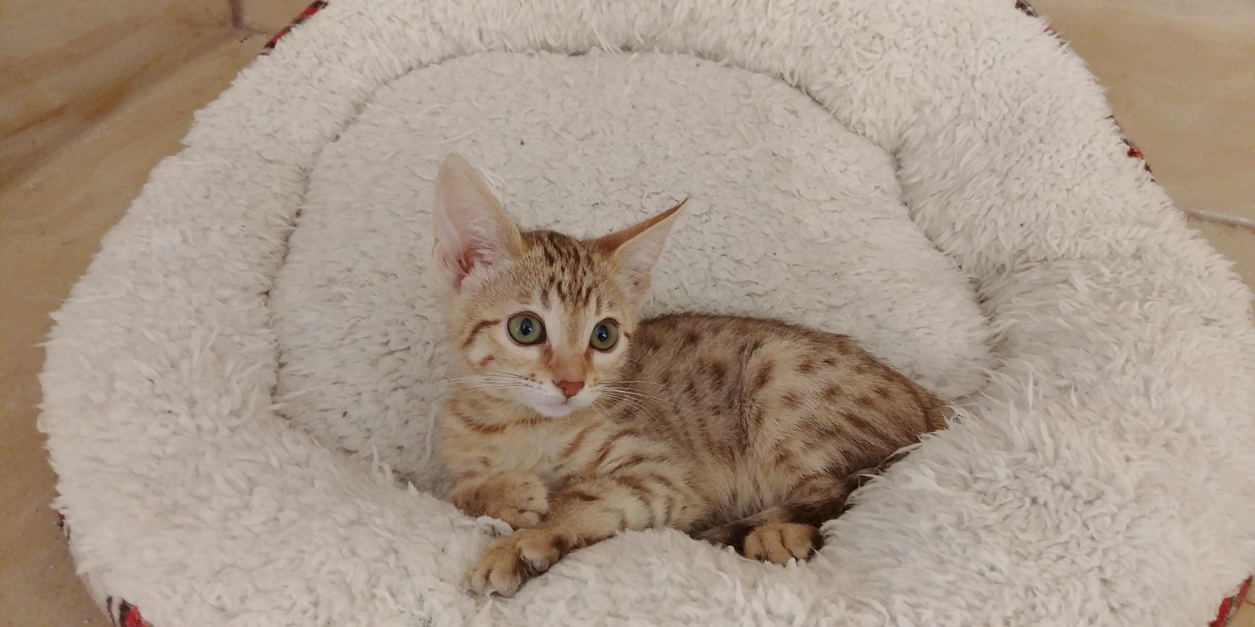 Exotik Cats (23)