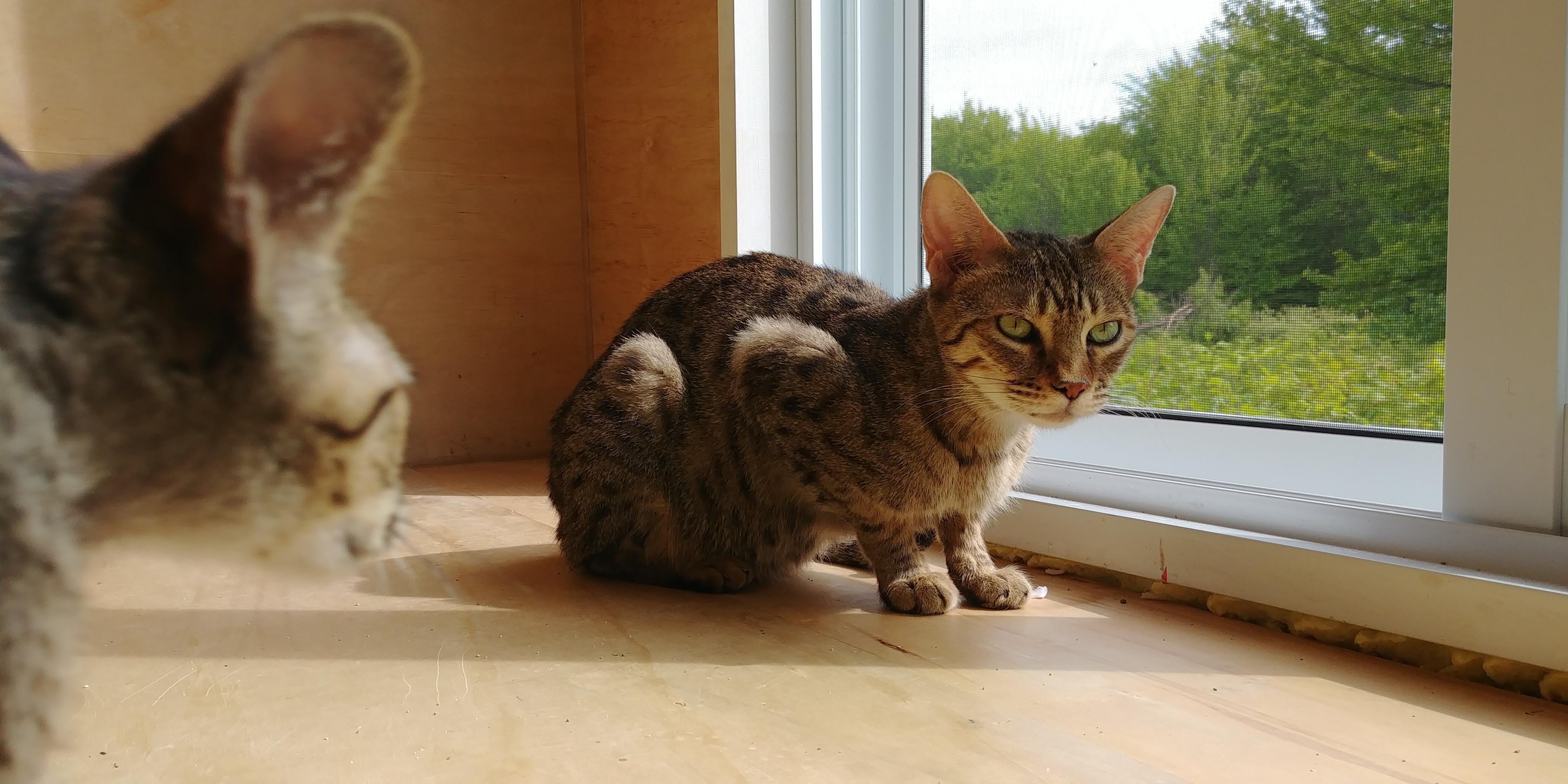 Exotik Cats (26)