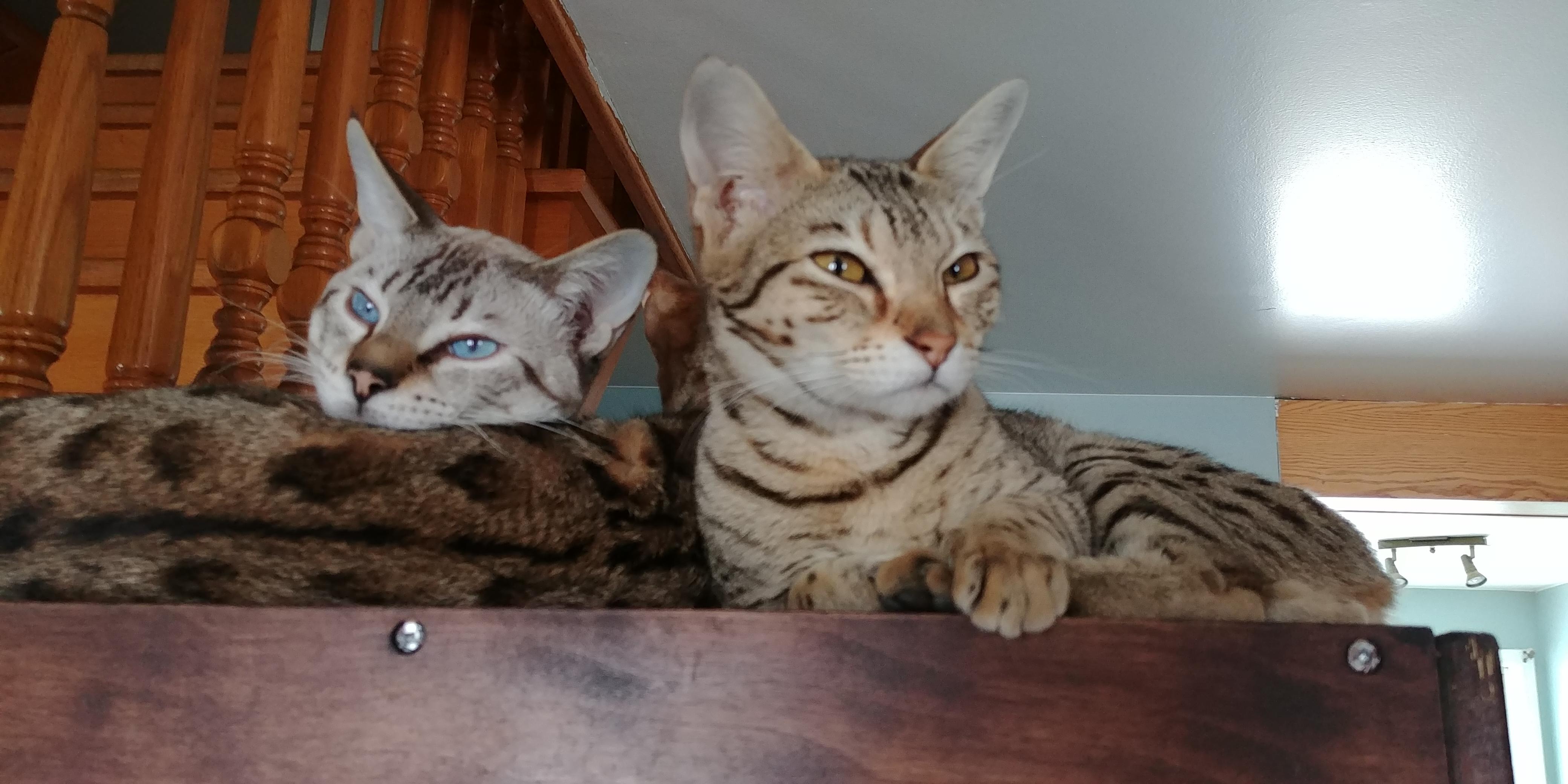 Exotik Cats (6)