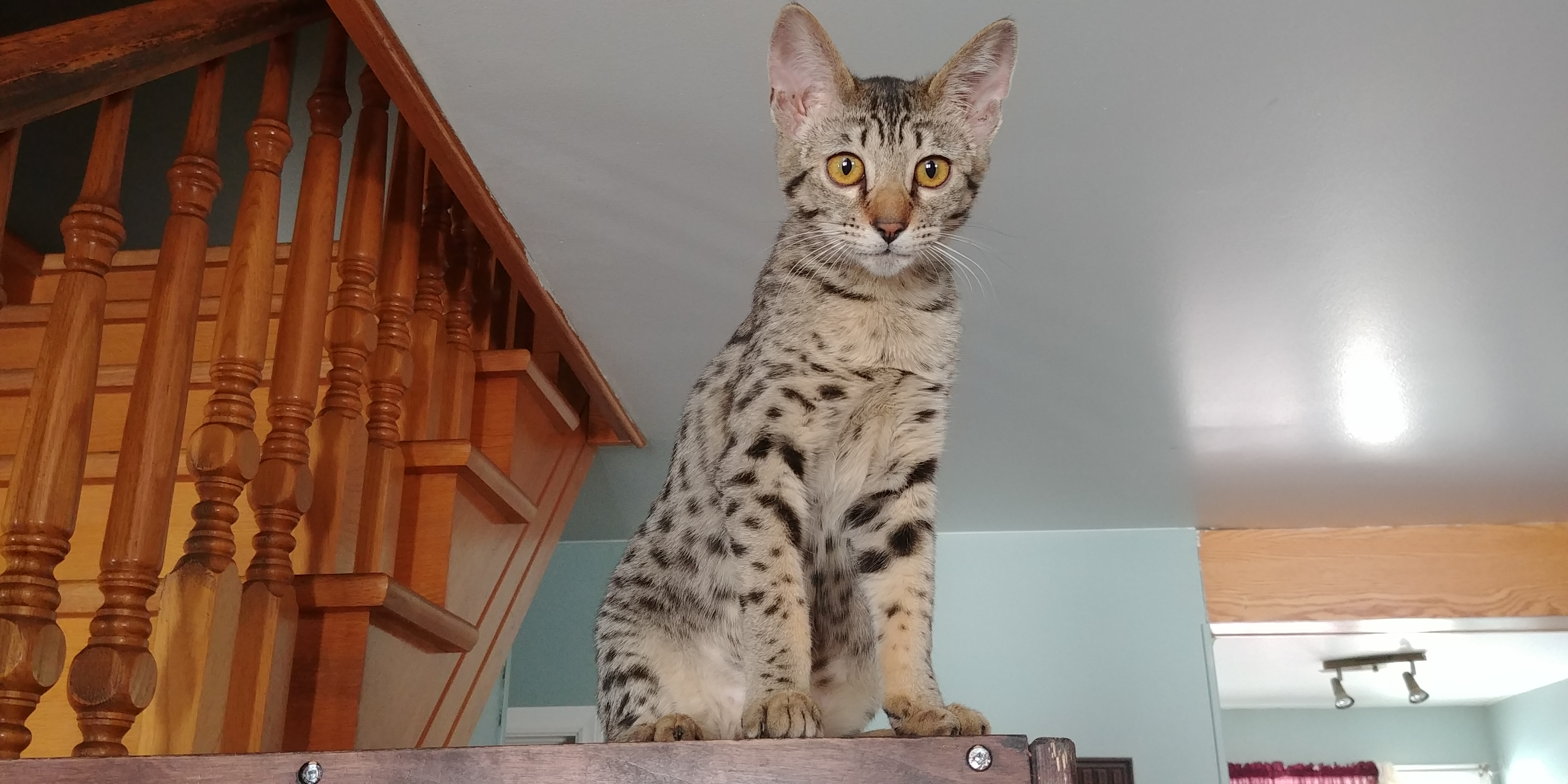 Exotik Cats (7)